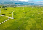 Ninh Thuan's wind farm proves a hit among young travelers