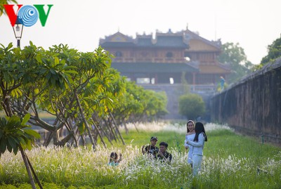 Discovering vibrant white grass check-in points of Hue city