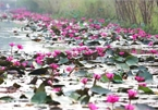 Discovering stunning water lilies of Yen stream