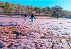 Discovering stunning pink grass hills of Da Lat
