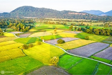 Exploring picturesque Ta Pa paddy fields from height