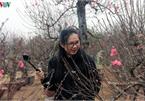 Crowds flock to Nhat Tan flower village as Tet draws near