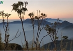 Viewing a spectacular sunset from Ky Quan San mountain