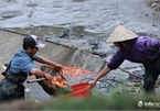 Business booms in red carp farming village ahead of Kitchen Gods Day