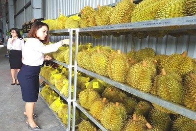 Traders, exporters advised not to transport produce to northern border gates