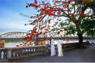 Flamboyant flowers leave streets of Hue awash with red