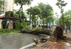 Trees across Hanoi devastated by storm Wipha