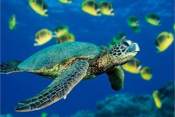 Programme to promote conservation of endangered sea turtles
