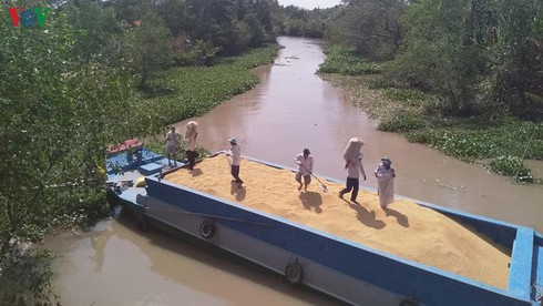 temporary suspension of rice exports given thumbs-up hinh 1