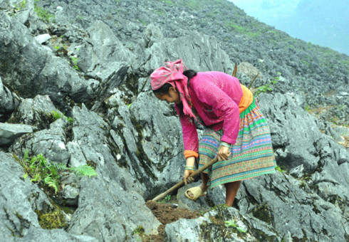 mong ethnic people cultivate on rocks hinh 1