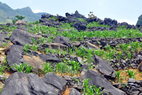 mong ethnic people cultivate on rocks hinh 2