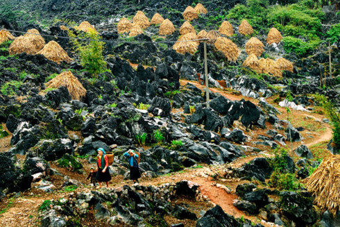 mong ethnic people cultivate on rocks hinh 0