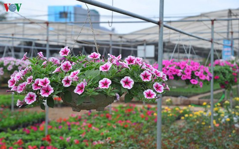 flower villages busy for tet hinh 0