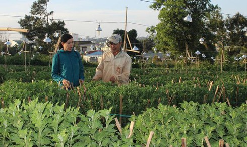 flower villages busy for tet hinh 1