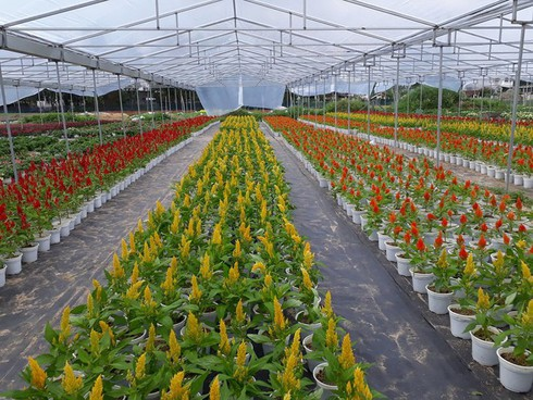 flower villages busy for tet hinh 2