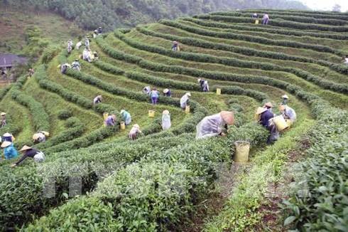 thai nguyen festival honours tea processing industry hinh 0