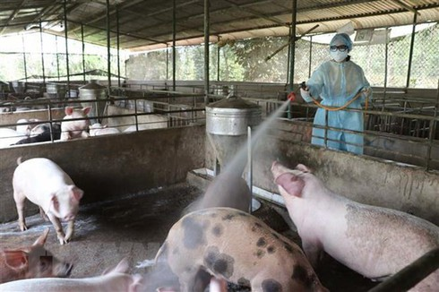 vietnam, france partner in producing vaccines against livestock diseases hinh 0