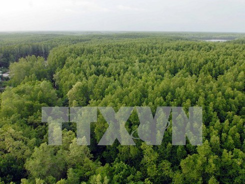 vn's national forest stewardship standard effective from may hinh 0