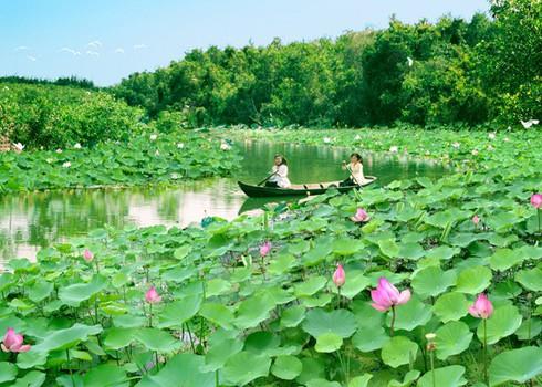 lotus dreams hinh 0
