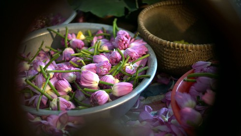 past and present linked in hanoi's tradition of enjoying lotus tea hinh 1