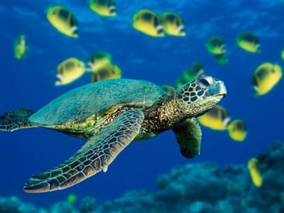 programme to promote conservation of endangered sea turtles hinh 0
