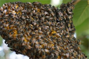 Bảo vệ tổ ong bằng robot và công nghệ AI