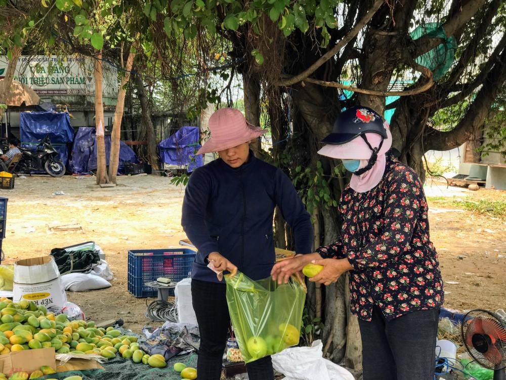 Người bán cam kết đây là xoài chín cây tự nhiên nên vị ngọt, thơm số ít là xoài già để từ 1-2 ngày là chín đều.
