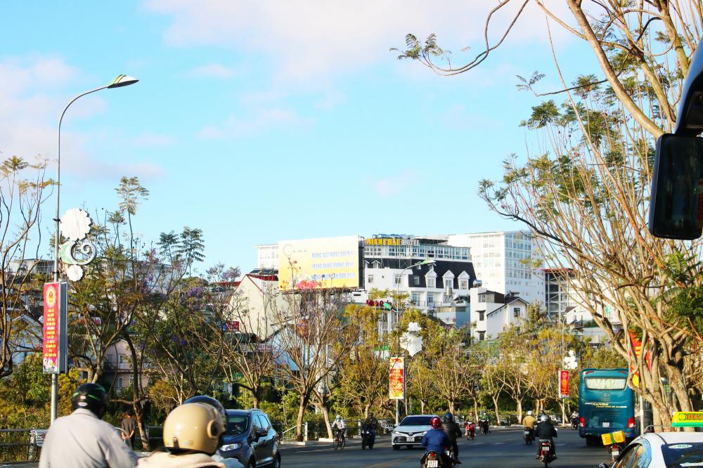 Phượng tím trên đường Nguyễn Văn Cừ