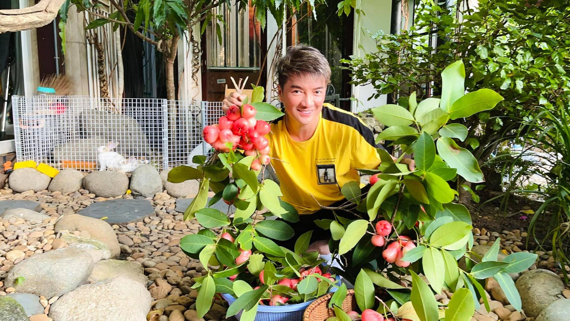 Đàm Vĩnh Hưng khoe trái cây thu hoạch trong vườn