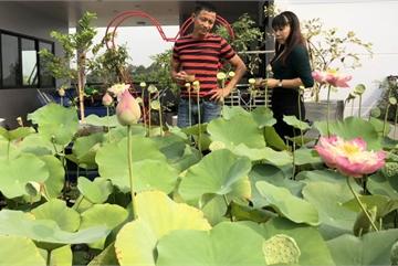 Người đưa cả 'cánh đồng làng' miền Bắc lên sân thượng ở Sài Gòn