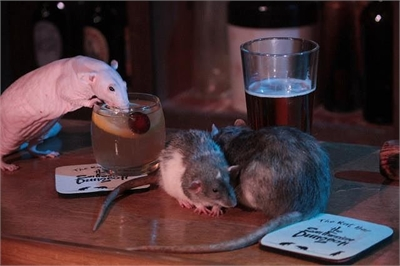 Trải nghiệm đáng sợ ở quán bar chuột bò lổm ngổm