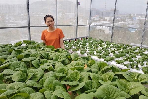 Gia đình trẻ biến sân thượng trống thành 'khu vườn trên mây'