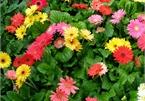Năm mới cắm những loại hoa này, gia chủ vừa hạnh phúc vừa 'tiền vào như nước'