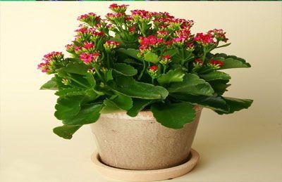 Những loại cây trồng trong nhà vừa lọc sạch không khí, vừa mang tài lộc cho chủ - ảnh 1