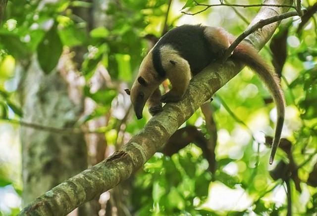 Top 10 loài động vật 'bốc mùi' nhất thế giới - ảnh 3