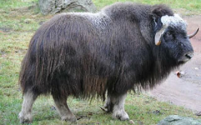 Top 10 loài động vật 'bốc mùi' nhất thế giới - ảnh 5