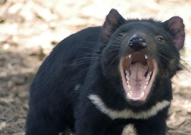 Top 10 loài động vật 'bốc mùi' nhất thế giới - ảnh 4