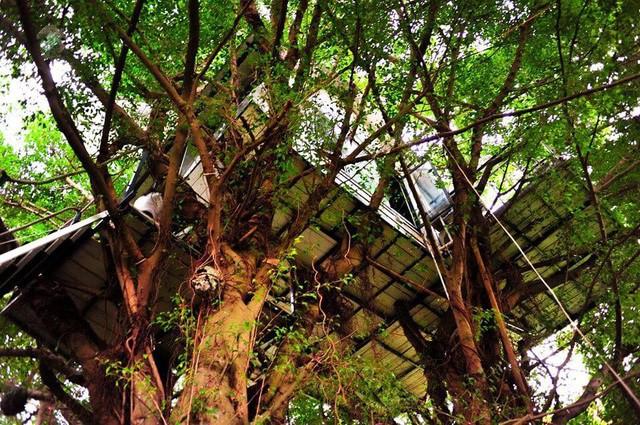 Cận cảnh những ngôi nhà 'treo mình' trên cây, 'độc' nhất Việt Nam - ảnh 4