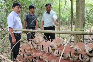 Genome of rare Linhzhi mushroomconserved