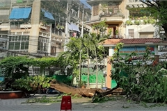 One student killed, 12 injured as tree falls at school