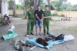 Nghe An police uncover wildlife trafficking ring from Lao to Vietnam