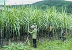 VN initiates anti-dumping investigation on sugar imported from Thailand