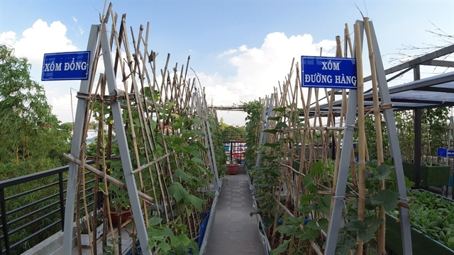 Rooftop garden is peaceful retreat, food resource for HCM City family