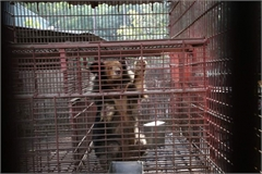 Over 1,130 wild animals rescued in VN in 2020