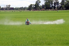 The use of pesticide in Mekong Delta remains high