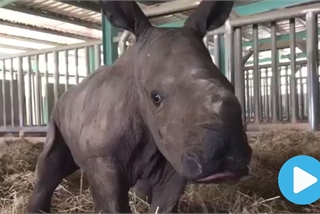 Baby rhino born in the middle of COVID-19