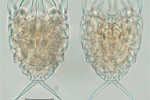 Five new rotifer species found in central Vietam
