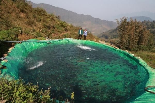 Sa Pa salmon farmers hit by pandemic