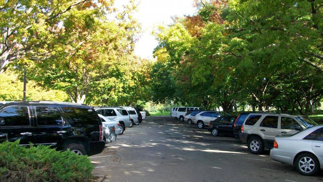 Khi trời nắng, nhất là vào mùa hè, tài xế hãy tìm một bóng râm để cho chiếc xe của mình được đậu ở đó