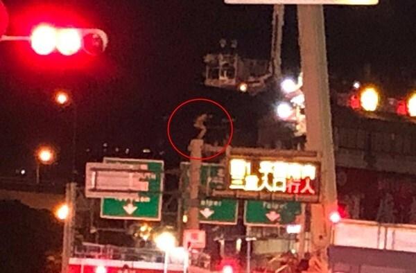 Cô gái mặc quần đùi trèo cột đèn cao 8m khiến cảnh sát hết hồn - 2